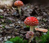 Fly agaric by Lin_O, photography->nature gallery