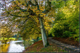 Early Stage of Fall 3 by corngrowth, photography->landscape gallery