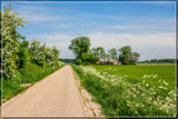 Rural Spring 4 by corngrowth, photography->landscape gallery