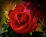 English by biffobear, photography->flowers gallery
