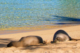 Monk Seal Visitors by jeenie11, photography->animals gallery