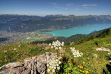 Looking out over the Brienzersee by Paul_Gerritsen, Photography->Landscape gallery