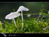 white glow by kodo34, Photography->Mushrooms gallery