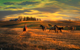 Open Range by 0930_23, photography->animals gallery
