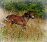 Pony by biffobear, photography->animals gallery