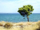 Guard by koca, photography->shorelines gallery