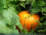 Autumns First Fiery Orange Treasure !!! by verenabloo, Photography->Nature gallery