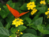 Orange on Yellow by wheedance, Photography->Butterflies gallery