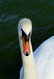 Good Looking! by braces, Photography->Birds gallery
