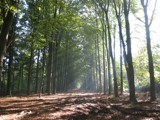 Forrest with sunbeams by molefi, Photography->Landscape gallery