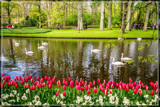 Swans At Parade by corngrowth, photography->gardens gallery