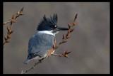 Very illusive by garrettparkinson, photography->birds gallery
