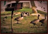 Family Picnic by Pjsee16, photography->birds gallery