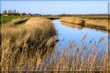 'Winter' In Zeeland by corngrowth, photography->landscape gallery