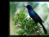 Blackbird in the Everglades 1 - rework by Hottrockin, Rework gallery