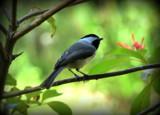 Warbler? by GomekFlorida, photography->birds gallery