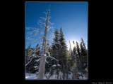Hoar Frost in the Sun by d_spin_9, Photography->Landscape gallery
