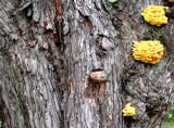 Funky Fungus by razorjack51, Photography->Mushrooms gallery
