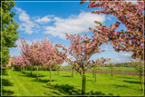 Farm Driveway In Spring by corngrowth, photography->landscape gallery