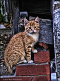 In memory of Felix the Cat by WmC, photography->pets gallery