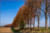 Polder Perspective 1 by corngrowth, photography->landscape gallery