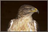 His Majesty........... by fogz, Photography->Birds gallery