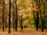 Golden glow by ekowalska, photography->landscape gallery