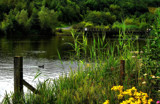 Poolside by biffobear, photography->water gallery