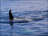 Self Help for Cetaceans by Pjsee16, photography->animals gallery