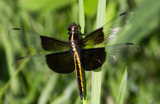 Another Dragonfly by Pistos, photography->insects/spiders gallery
