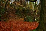 Woodland Steps by biffobear, photography->landscape gallery