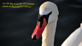 A Swan's New Year Message by braces, photography->birds gallery