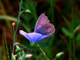 Graceful complement.. by 89037, Photography->Butterflies gallery