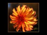 A Garden D-Light by tigger3, Photography->Flowers gallery