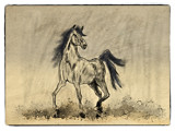 Horse Romp by bfrank, illustrations gallery