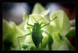 Its a bugs life by JQ, photography->insects/spiders gallery