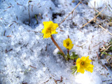 Life springs forth at 11500 ft by Fayettevillian, Photography->Flowers gallery