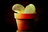 Seashells in a Flower Pot by Fifthbeatle, photography->still life gallery