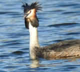 Bad hair day ... by owldgirl, photography->birds gallery