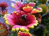 Busy at Work! by marilynjane, Photography->Flowers gallery