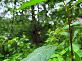 Spidy is waiting by mausi2541, photography->insects/spiders gallery