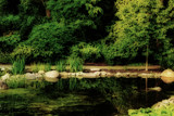 Park Scene by Ramad, photography->landscape gallery