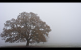 Oak in Fog by coram9, photography->landscape gallery