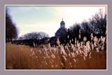 Middelburg (08), Oostkerk 1 by corngrowth, Photography->General gallery