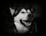 Luna On the Other Side by Marzena, contests->b/w challenge gallery
