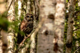 Owl by Eubeen, photography->birds gallery