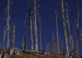 Forest Fire Aftermath by claysumj, Photography->Landscape gallery
