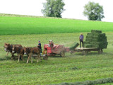 Amish Day in the Life by Pfaff, Photography->People gallery