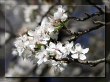 The Beauty of Spring  #1 by LynEve, photography->flowers gallery