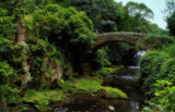 Jesmond Dene 1 by biffobear, photography->bridges gallery